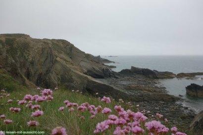 St. Davids_Coastal Path nach New Gale Blumen