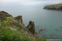 St. Davids_Coastal Path nach New Gale Bucht