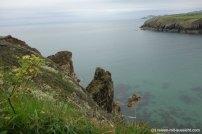 St. Davids_Coastal Path nach New Gale Bucht